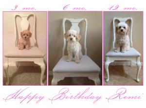 Happy Birthday Remi